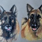 Dog-portrait-Kira-Jake-GSDs