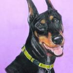 Dog-portrait-Mya-DobermanPinscher