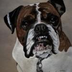 dog-portrait-Bodee-Bulldog