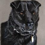 dog-portrait-Chancer-Zahn