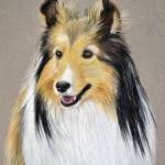 dog-portrait-Chapin-ShetlandSheepdog