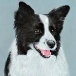 dog-portrait-CiCi-BorderCollie