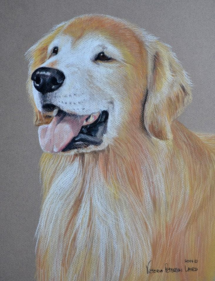 Cooper, Golden Retriever
