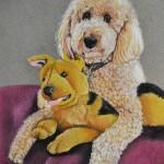 dog-portrait-Darby-Goldendoodle