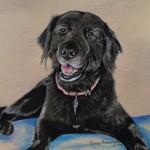 dog-portrait-Dixie-MixedBreed