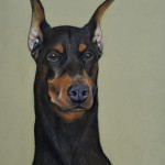 dog-portrait-Doberman3