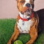 dog-portrait-Elwood