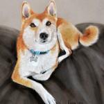 dog-portrait-Fluffy-ShibuInu