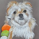 dog-portrait-Gibbs