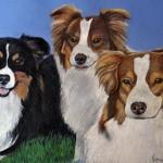 dog-portrait-HopperAussies