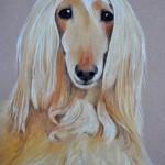 dog-portrait-Loki-Afghan-Hound