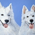 dog-portrait-Maestro-Peach-Samoyed