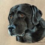 dog-portrait-Moon-Labrador