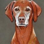 dog-portrait-Morgan-Vizsla