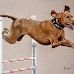 dog-portrait--Quin-Vizsla