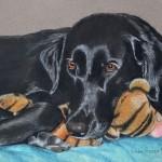 dog-portrait-Renee-Labrador