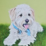 dog-portrait-Rookie-terrier
