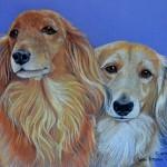 dog-portrait-RubyNugget-Dachshund