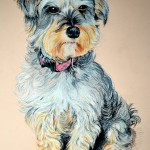dog-portrait-Sally-Schnauzer