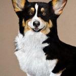 dog-portrait-Sammi-Corgi