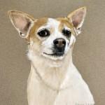 dog-portrait-Snoop-dog