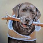 dog-portrait-Yogi-Labrador-Retriever