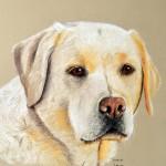 dog-portrait-Zeppelin_LabradorRetriever
