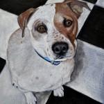 dog-portrait-Zeus-MixedBreed
