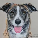 dog-portrait-Zia