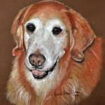 Ally, Golden Retriever