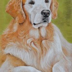 Ava, Golden Retriever