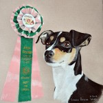 Portuguese Podengo, Best In Show