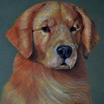 Bola, Golden Retriever