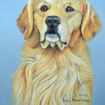 Connor, Golden Retriever