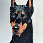 Rocket, Doberman