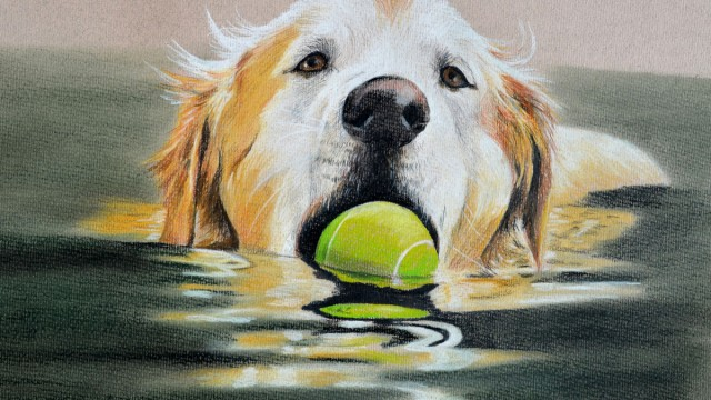 Dylan, Golden Retriever