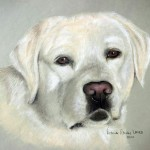 Echo, Labrador Retriever