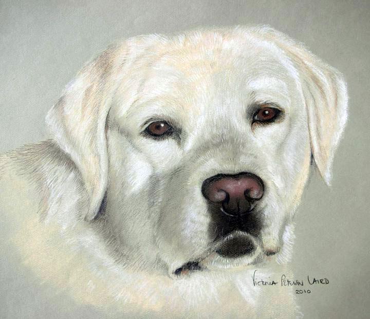 Echo, Labrador Retriever