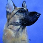 Envy, German Shepherd