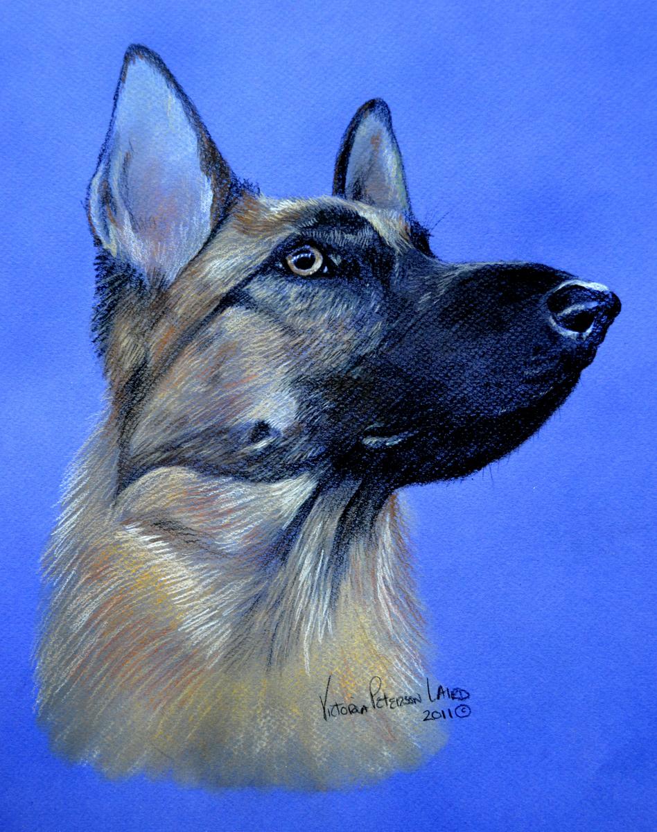Envy, German Shepherd