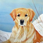 Getty, Golden Retriever