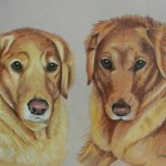 Ginger and Nutmeg, Golden Retrievers