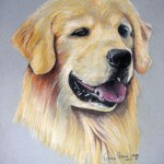 Gino, Golden Retriever