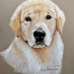 Paige, Golden Retriever
