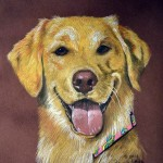 Jake, Golden Retriever