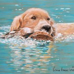 Jake in Water, Golden Retriever