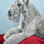 Brogan, Kerry Blue Terrier