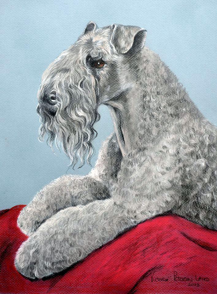 Brogan, Kerry Blue Terrier