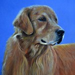 Kodak, Golden Retriever