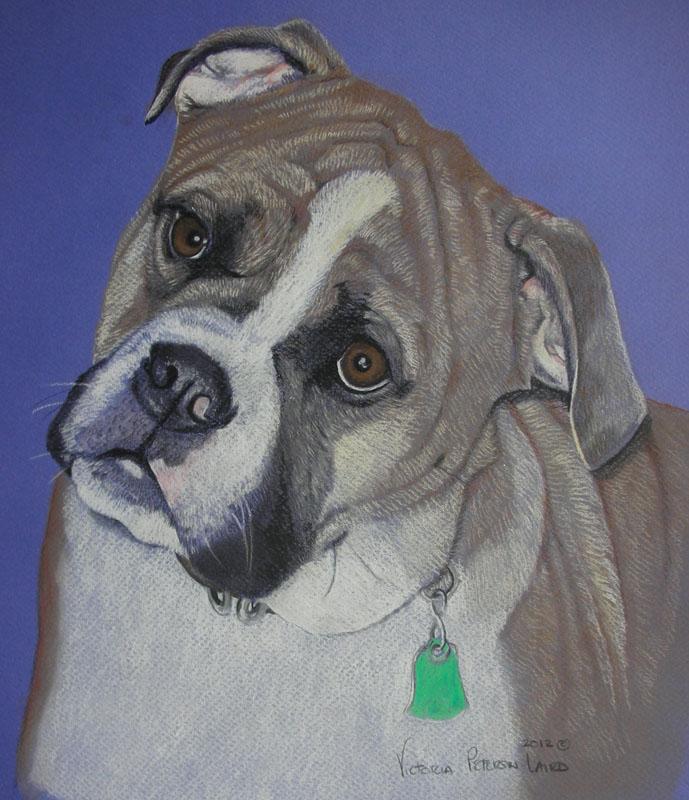 Kyle, Bulldogge
